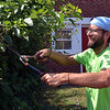 (Bob Raines--Digital First Media)    <br /> Caleb Derby, Habitat for Humanity, trims bushes on Swede St., Norristown during the Rock the Block community improvement event Sept. 17, 2016.