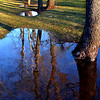 Bob Raines--Digital First Media<br /> Trees are reflected in the rain water that has collected in low spots at Fischer's Park, Harleysville Jan. 25, 2017.