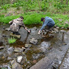 Hatboro-Horsham High School students John Seitter, left, and Will Passaretti search for macroinvertebrates at the Jarrettt Nature Center's 15th anniversary and Earth Day celebration April 22.  Christine Wolkin — For Digital First Media