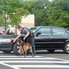 Members of the Horsham Police Department conduct a K-9 demonstration in which their German Shepherds demonstrate a car bomb search during the town's National Night Out Aug. 1 outside the Horsham Municipal Complex.  Christine Wolkin — For Digital First Media