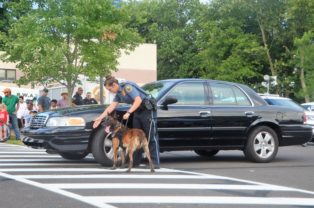 . Members of the Horsham Police Department conduct a K-9 demonstration in which their German Shepherds demonstrate a car bomb search during the town�s National Night Out Aug. 1 outside the Horsham Municipal Complex.  Christine Wolkin � For Digital First Media