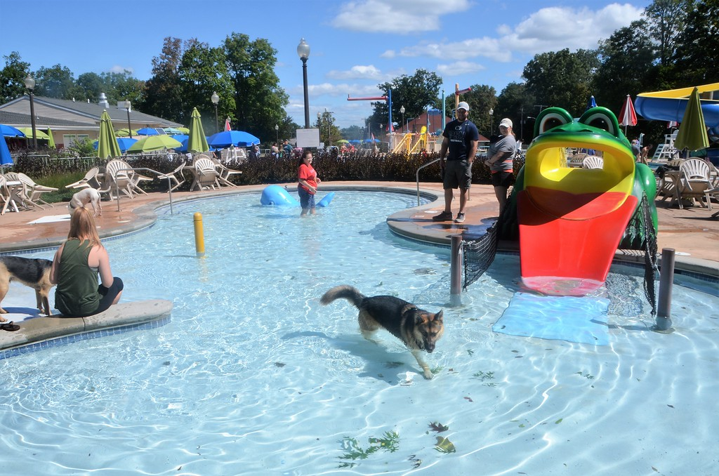 . Perkasie Borough Park and Recreation hosts its second annual Doggy Dip at the Menlo Aquatics Center Saturday, Sept. 9. Proceeds benefited the Perkasie Dog Park on Constitution Avenue.  Christine Wolkin � For Digital First Media