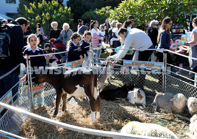 Montefiore Lag B'Omer Family Fun Day. Kindi Farm petting zoo. Pic Noel Kessel.