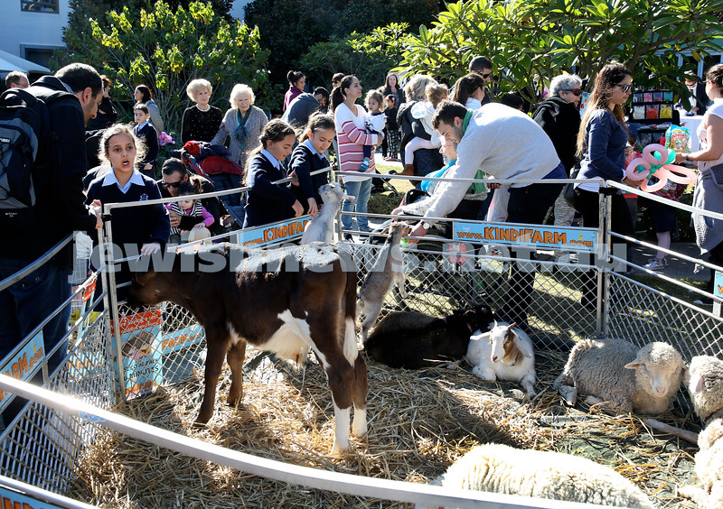 Montefiore Lag B'Omer Family Fun Day. Kindi Farm petting zoo. Pic Noel Kessel.