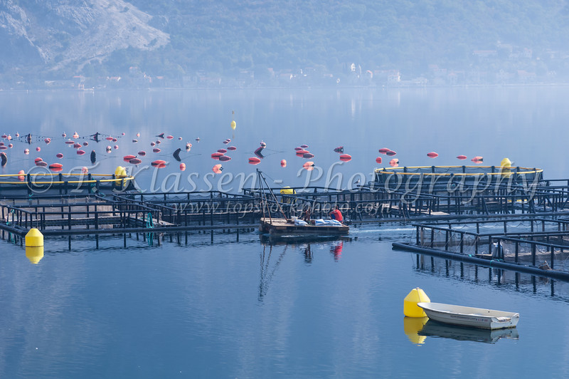 Fish farming in the calm waters of the Bay of Kotor, Montenegro.