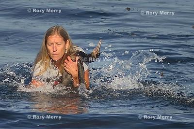 Cormorant Rescue