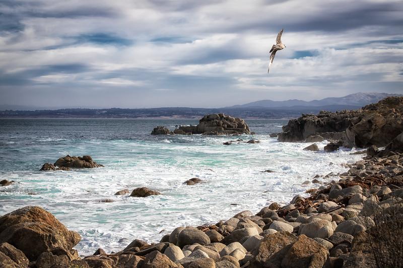 Monterey Shoreline