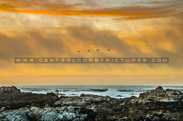 pacific grove-0486