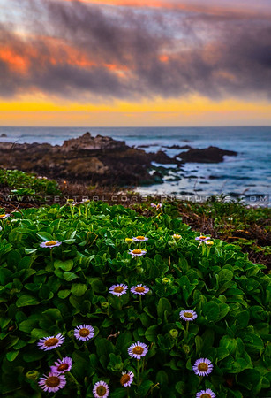 Monterey, Carmel, Pacific Grove