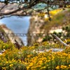 point-lobos-flowers_1947