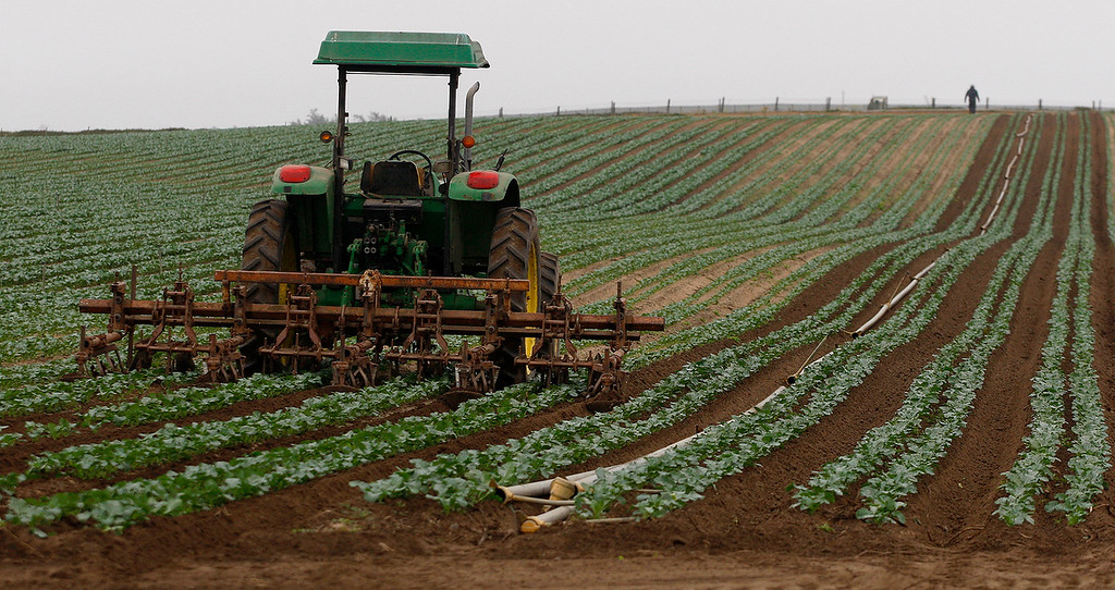 . A farmworker works a field off Lapis Road in Marina on Monday, July 2, 2018.  (Vern Fisher - Monterey Herald)