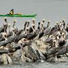 King Tide Moss Landing