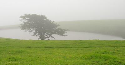 Drake Road Fog
