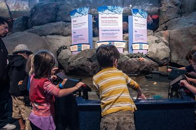 aquarium-games-2-2