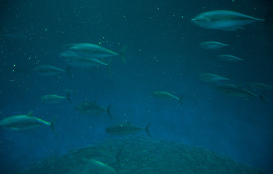 underwater-fish-1
