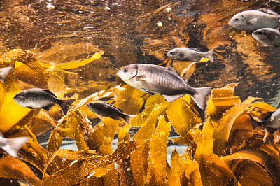 aquarium-fish-kelp-1-2