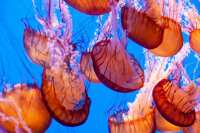 colorful-jelly-fish-4-2
