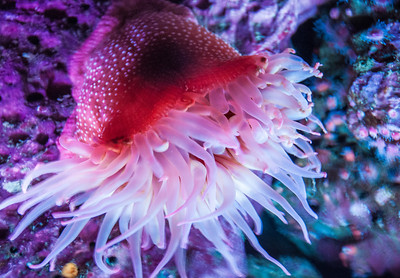 aquarium-sea-anemone-3-4