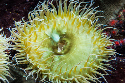 aquarium-sea-anemone-2-2