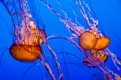 colorful-jelly-fish-2-1