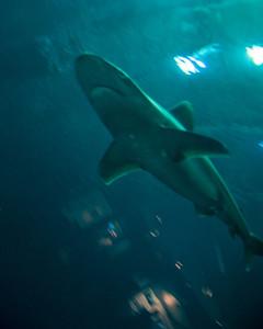 underwater-shark-2