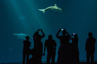underground-aquarium-sharks-2