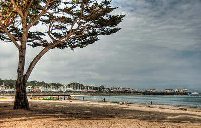 beach-tree-ocean-1