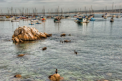 ocean-harbor-sailboats-1