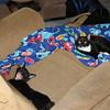 midnight mittens blanket nap