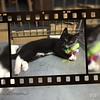 mittens cat film strip