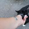 Tux the Tuxedo Cat