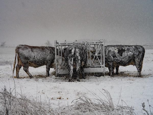 Jill Shaw - Caught in a snowstorm