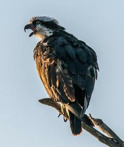V-Joseph McGahan_The Calling of The Birds