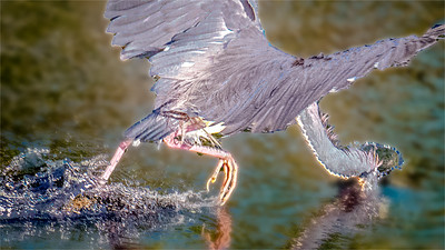 PeterNewman-Fishing
