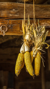 V-VinceComo-Corn Cob Bethpage Restoration