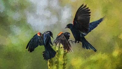 TomCrosley-Blackbirds