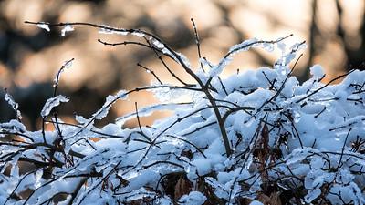 TomCrosley-Frosty Sunrise