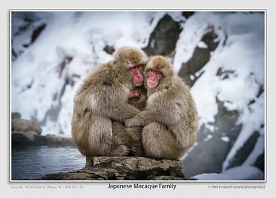 PradeepBansal_01Snow_Monkeys_