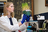 """WVU Student Caroline Leadmon works with her research on plants which she willl present to Congress for Federal funding at the event  """"Posters on the Hill"""", April 29-30. Only 60 students are selected nationwide for this event. April 11, 2019. Photo Greg Ellis"""