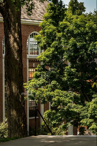 Morning light baths trees and E Moore Hall September 2019. (WVU Photo/Greg Ellis)