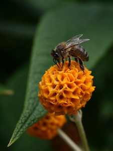 1st Place - Busy Bee by Agata Deren