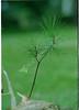 1996 twig