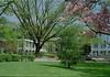 2nd peace tree