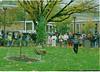 1996 peace tree 2