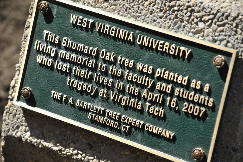 Virginia Tech Memorial Tree dedication
