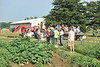 WVU faculty and the WVU community take part in the Organic Farm field day August 2012  (WVU Photo/Jake Lambuth)