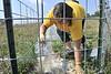 28406 Davis College Brittany Parks take water samples at the WVU Farm July 2012 (WVU Photo/Greg Ellis)