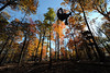 WVU students enjoy a colorful Zip Line Canopy Tour at the WVU University Forest October 2012 (WVU Photo)