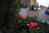 Christmas Wreath Social S 0011 JFS