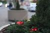 Christmas Wreath Social S 0084 JFS